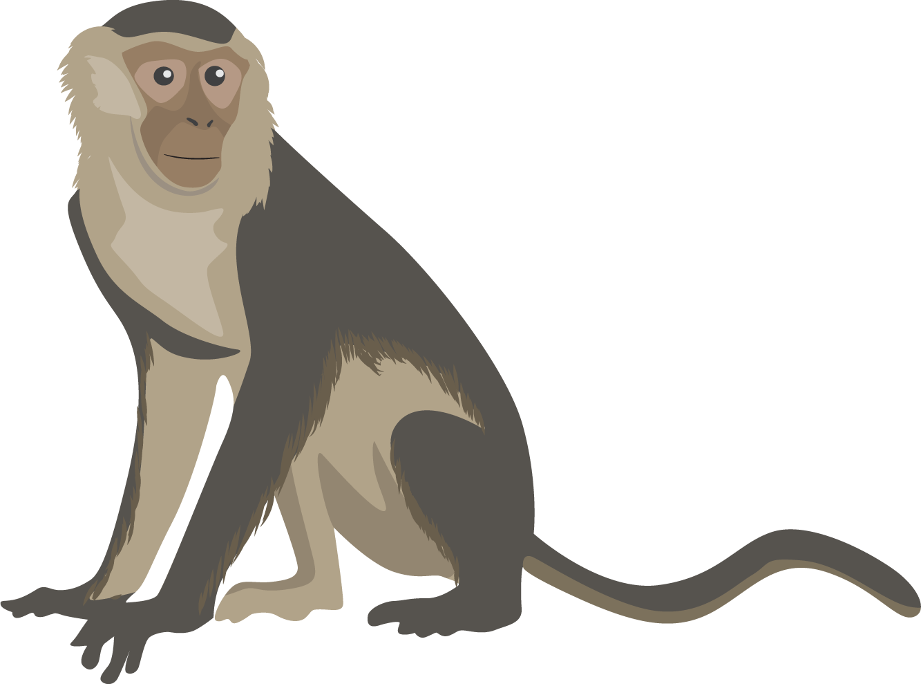 picture black and white stock Collection of free Capuchin clipart monkey clipart