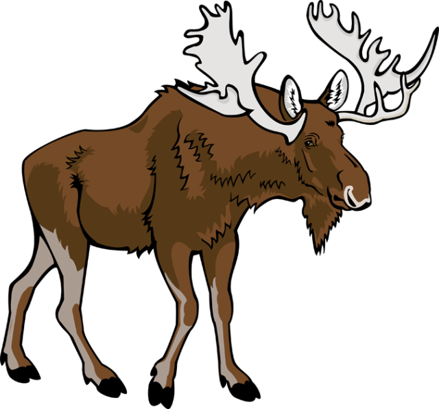 transparent library  collection of transparent. Moose clipart moose canadian.