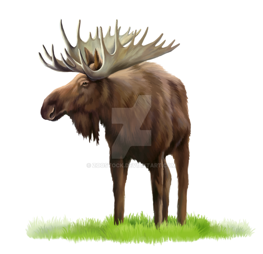 banner library stock Moose on a transparent background by ZOOSTOCK on DeviantArt