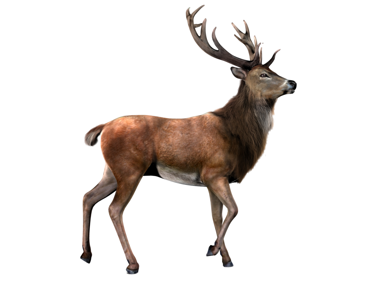 clipart library download Moose Reindeer Capreolinae Roe deer