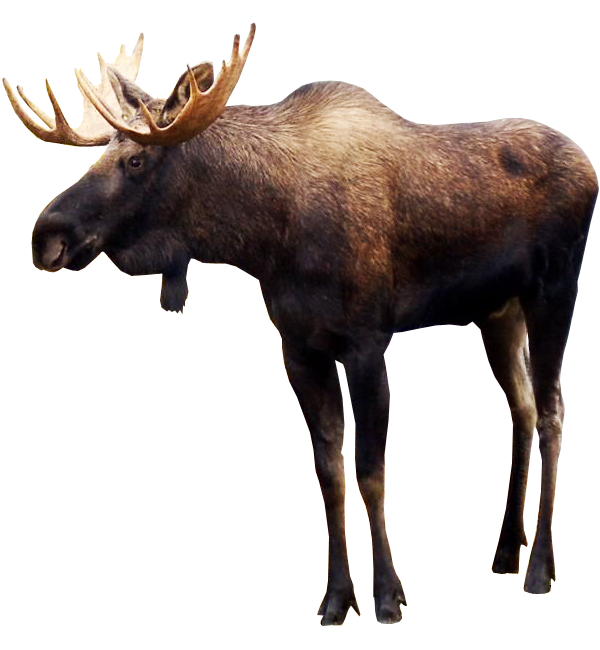 picture free download Moose PNG Images Transparent Free Download