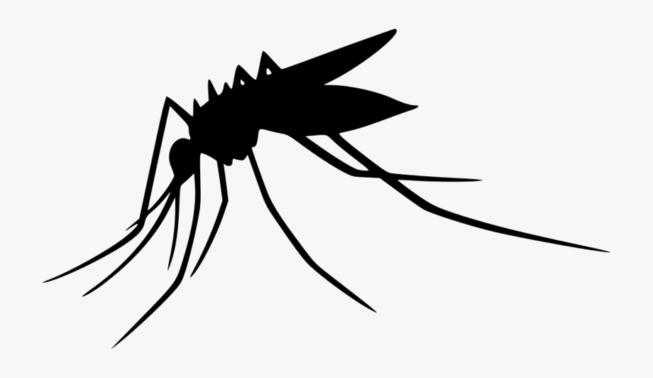 picture black and white download Transparent png mosquitoes free. Mosquito clipart.