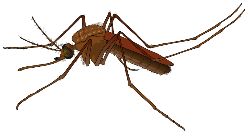 clipart royalty free download Free to use public. Mosquito clipart.