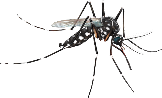 clip art freeuse Mosquito clipart. Transparent background free on.