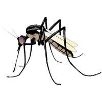 freeuse Mosquito clipart. Download free png photo.