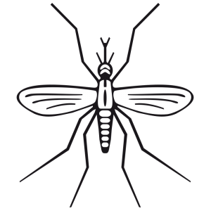 image royalty free download Mosquito clipart aquatic insect. Clip art download.