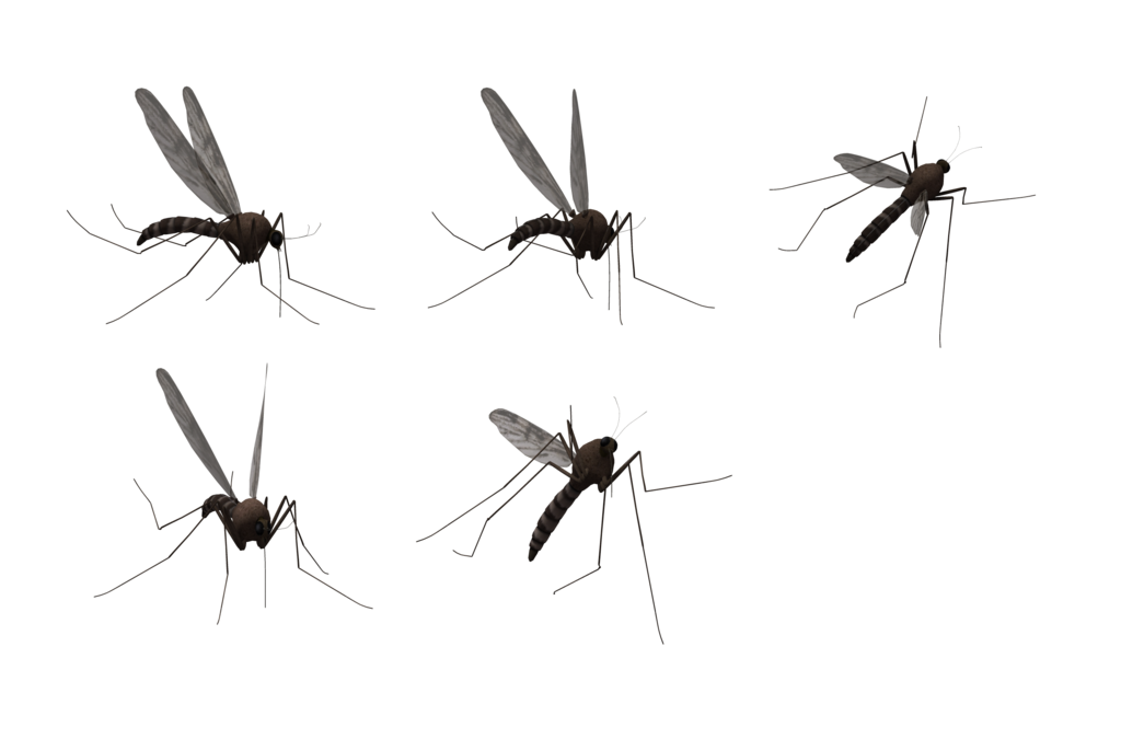 vector black and white download Png images free download. Mosquito clipart dead mosquito.