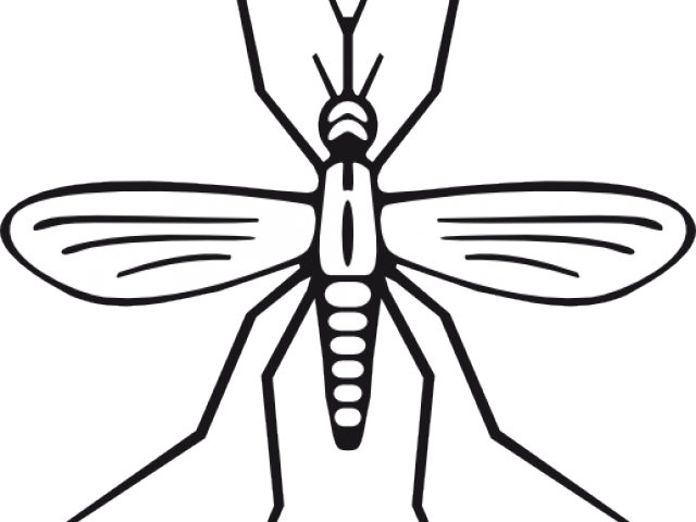 clip art transparent stock Mosquito clipart scratch skin. Free on dumielauxepices net.