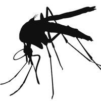 clipart library library Download Mosquito Free PNG photo images and clipart