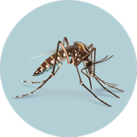 vector royalty free What You Need to Know About the Zika Virus