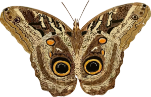 png free library Clip art at clker. Moth clipart.