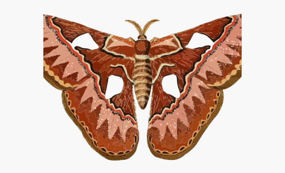 graphic transparent Cliparts free on clipartwiki. Moth clipart.