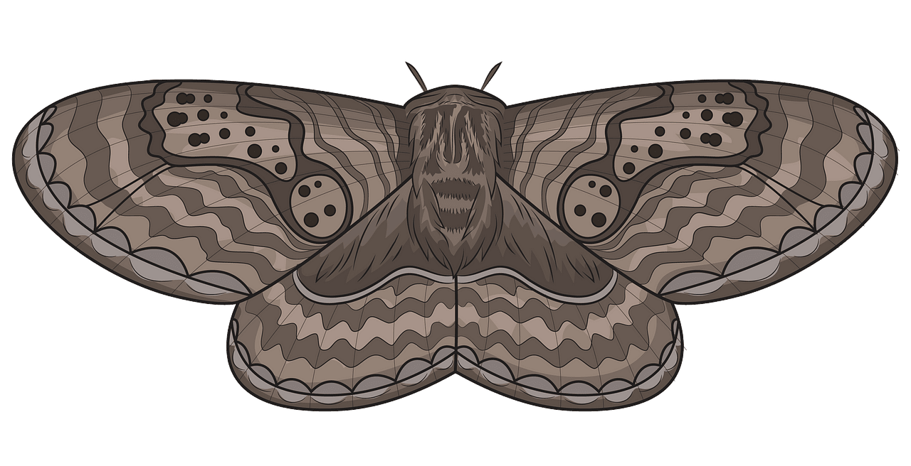 free stock Brahmeid free download creazilla. Moth clipart.