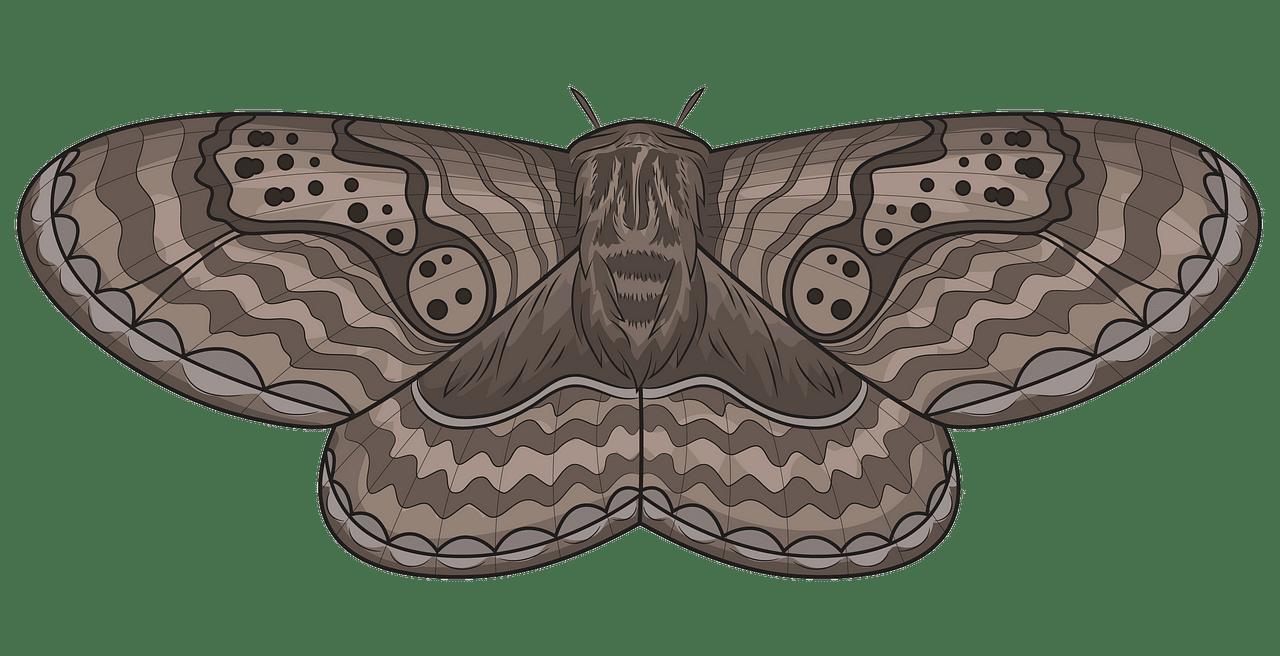 free stock Brahmeid free download creazilla. Moth clipart