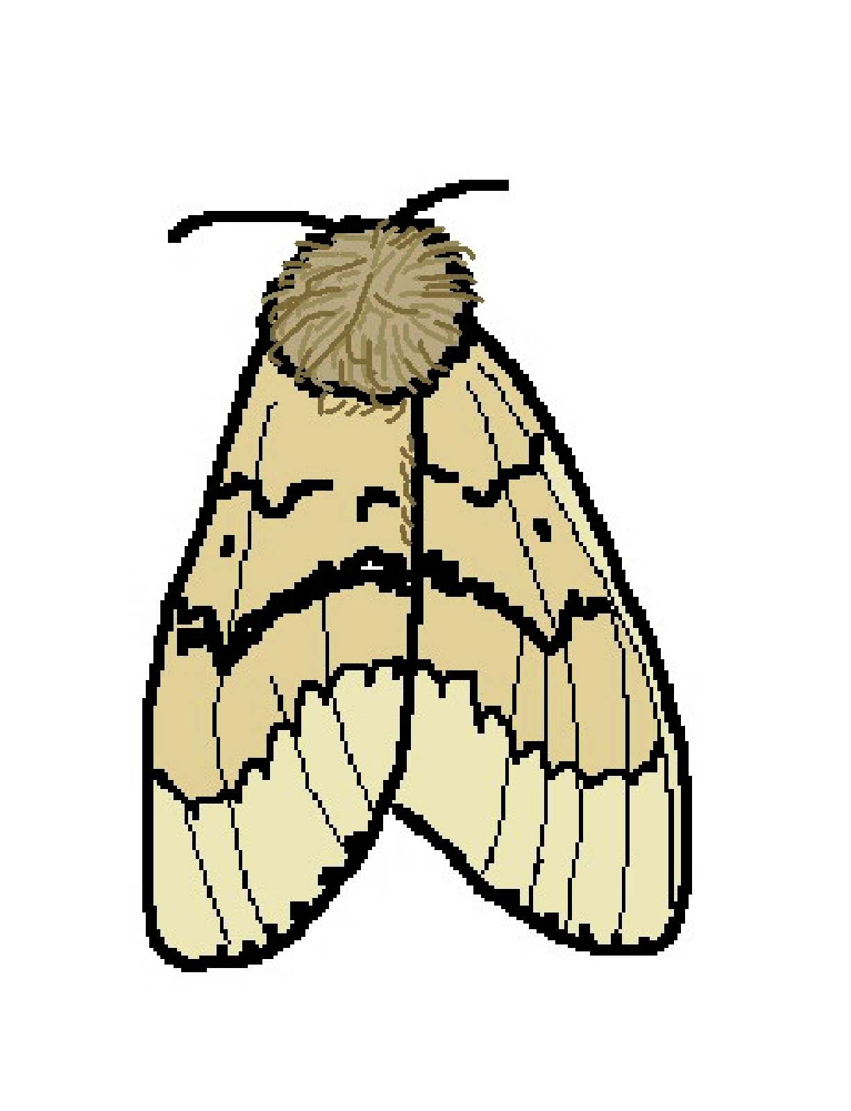 clip art royalty free Moth clipart. Free cliparts download clip