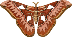 black and white stock Moth clipart. Clip art vector online.