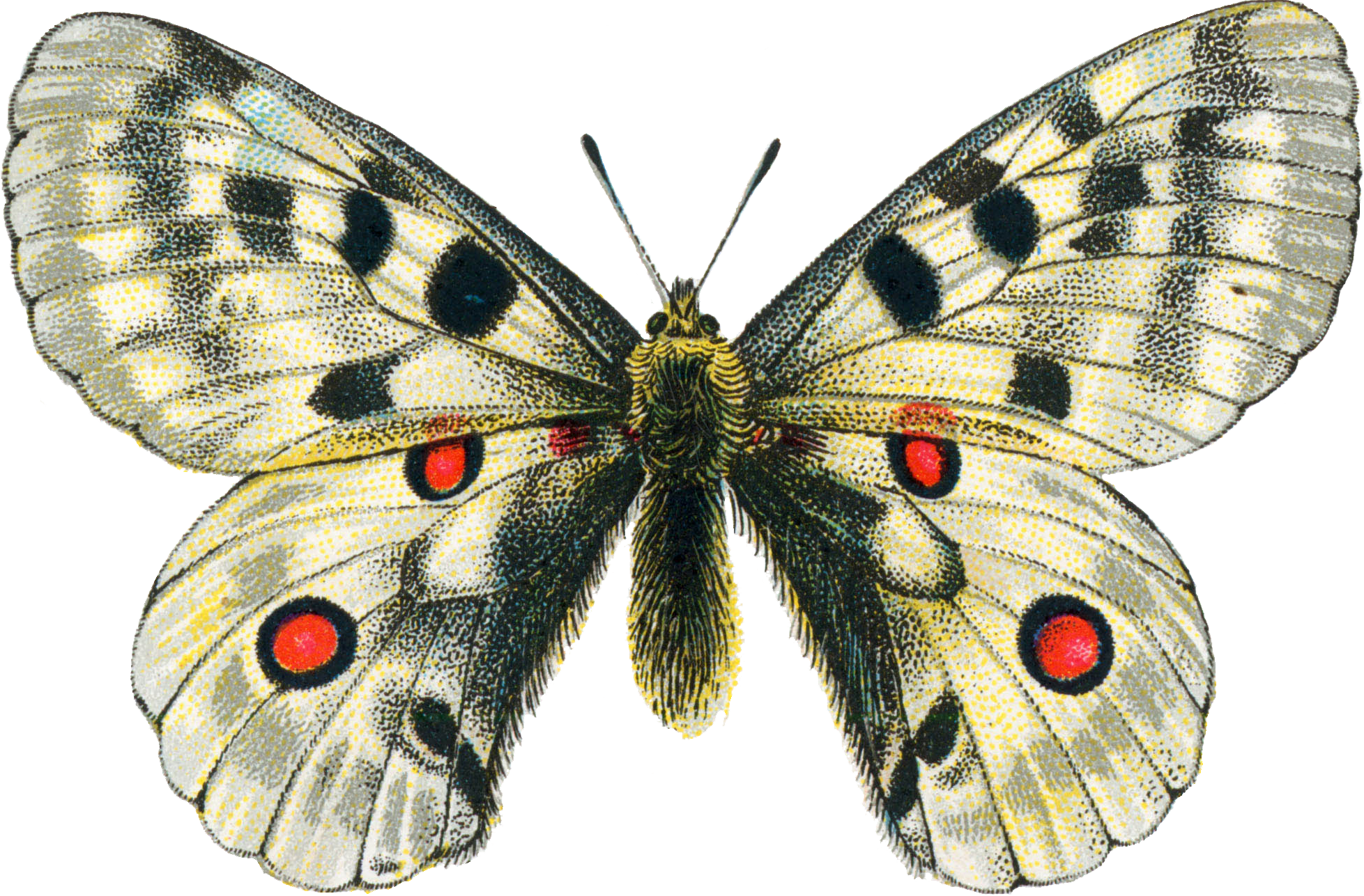 svg library Png mart. Moth clipart.