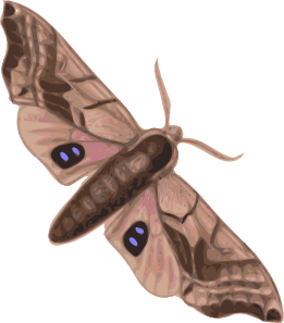 png free library Moth clipart. Clip art at clker.