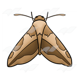 black and white Free on dumielauxepices net. Moth clipart