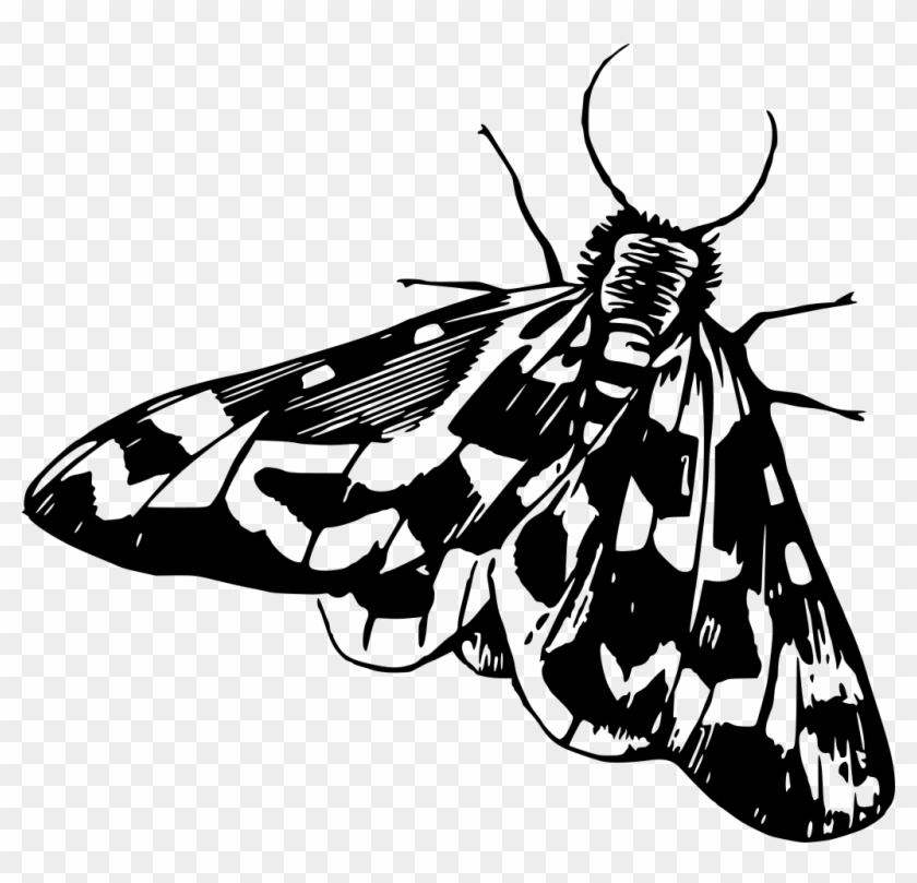 clipart transparent library Moth clipart black and white. Download png transparent .