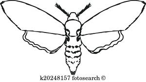 banner royalty free Collection of free download. Moth clipart black and white.