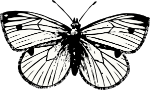 banner free library Cabbage clip art at. Moth clipart black and white.