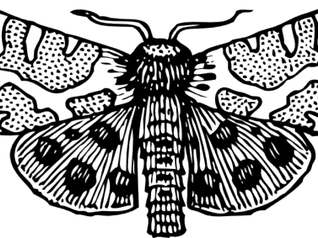 clip free Free on dumielauxepices net. Moth clipart black and white.