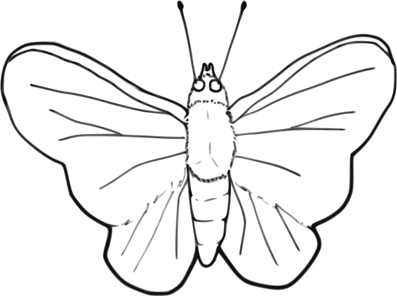 picture download Butterfly line art big. Moth clipart butter fly.