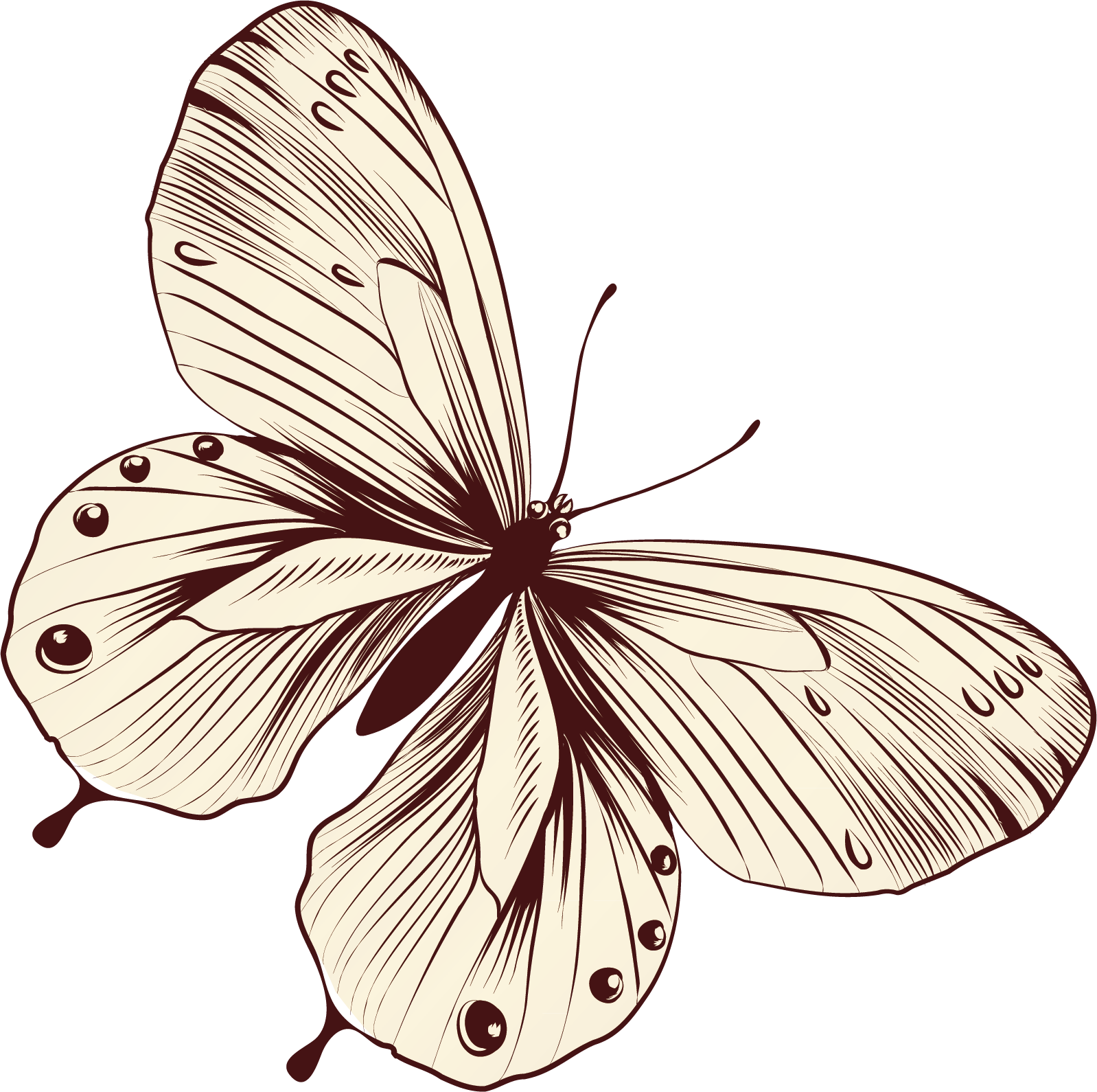 svg freeuse library Monarch butterfly pieridae clip. Moth clipart butter fly.