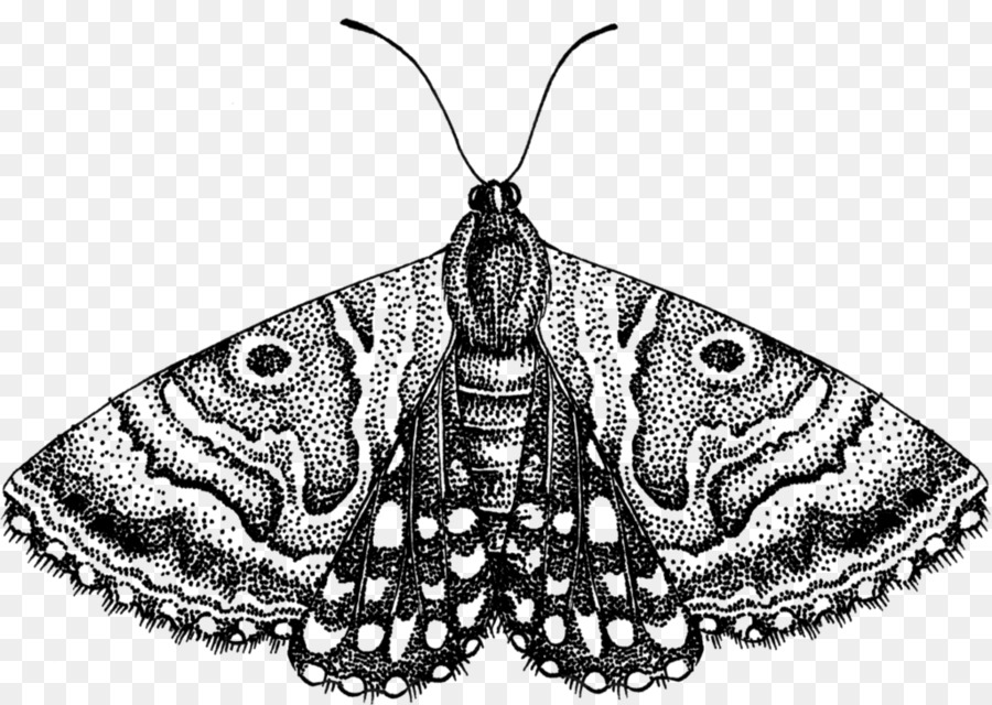 png stock Butterfly black and white. Moth clipart butter fly.