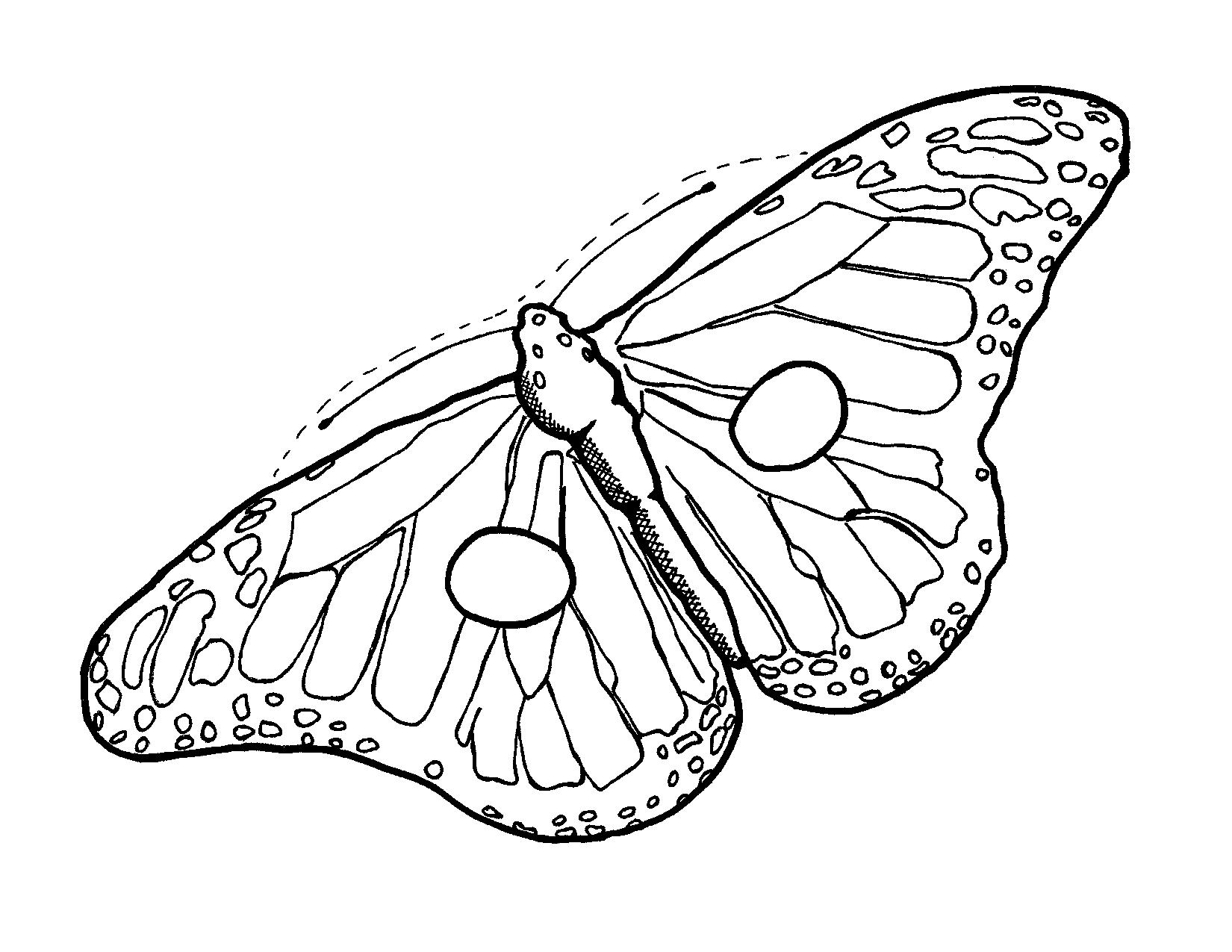 svg transparent stock Moth clipart butter fly. Butterfly outline butterflies moths.