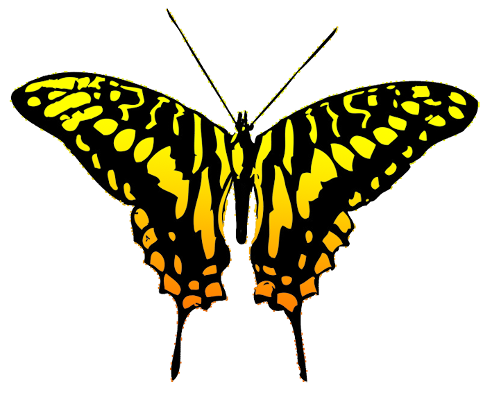 png download Butterfly orange and black. Moth clipart butter fly.