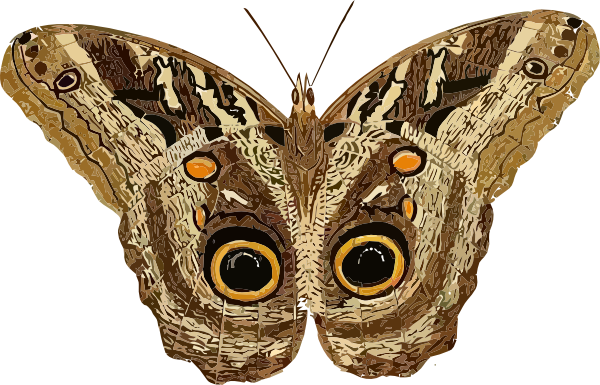 graphic free library Moth clipart butter fly. Clip art at clker.