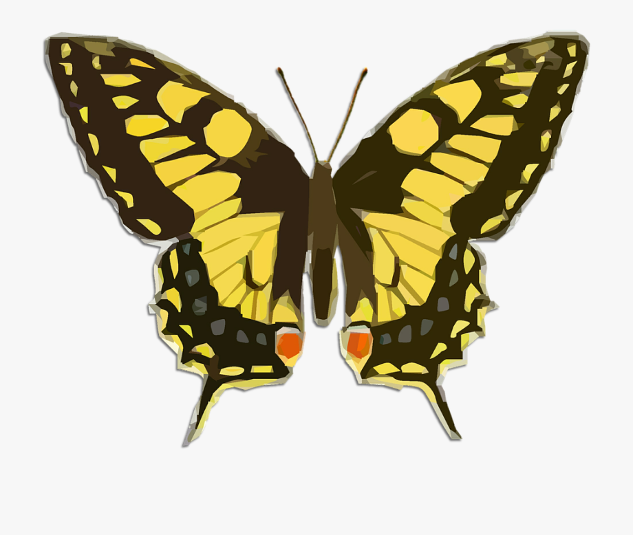 clip royalty free download Moth clipart butter fly. Clip art yellow butterfly.
