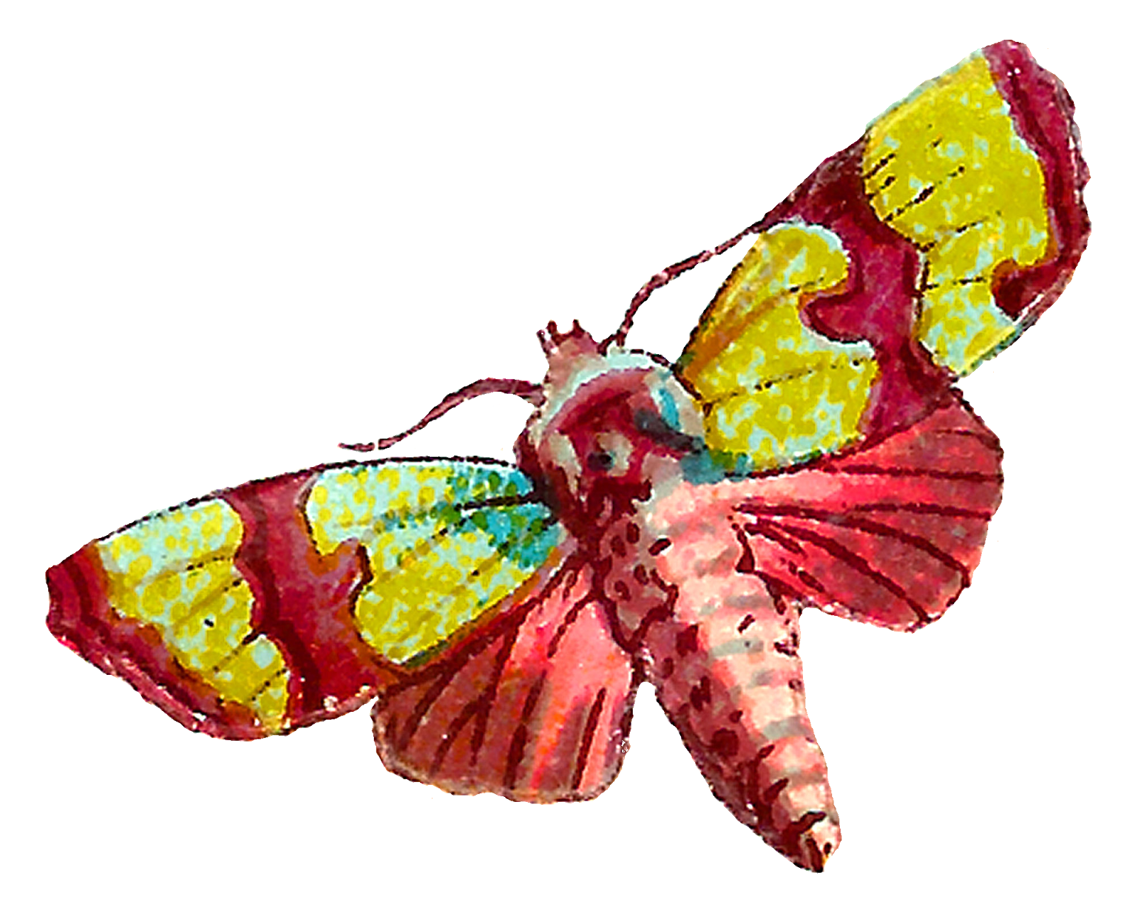 png library Moth clipart insect. Antique images death s.