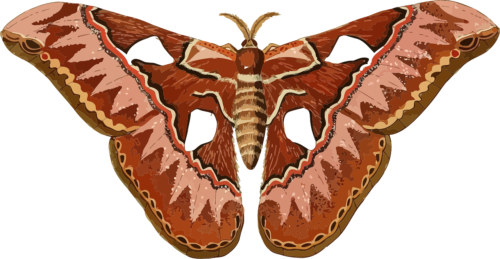 clip library stock Moth clipart insect. Animal butterfly reach museum.