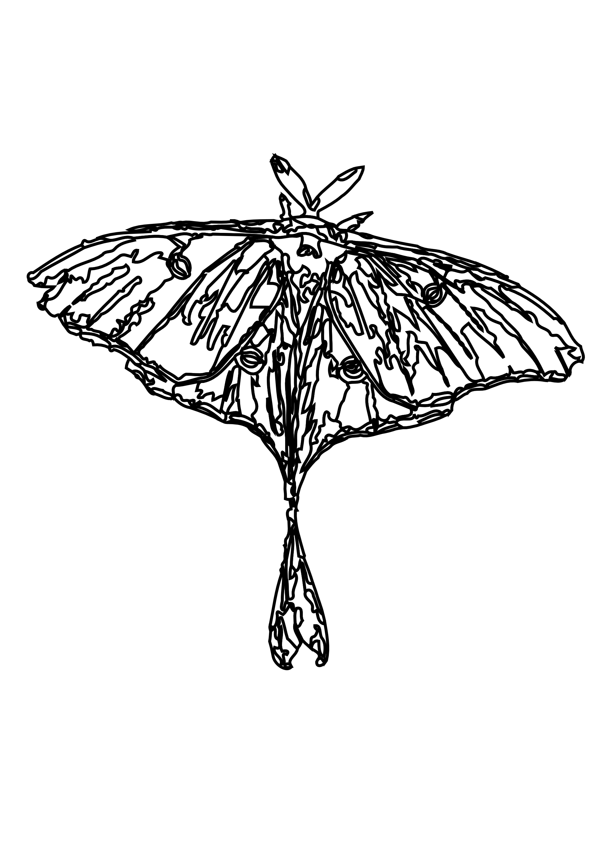 banner library download Moth clipart luna moth. Black and white free.