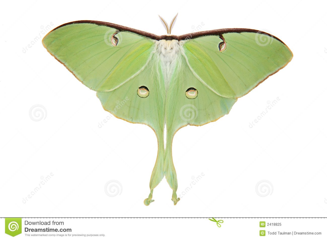 graphic library library Kid clip art . Moth clipart luna moth.