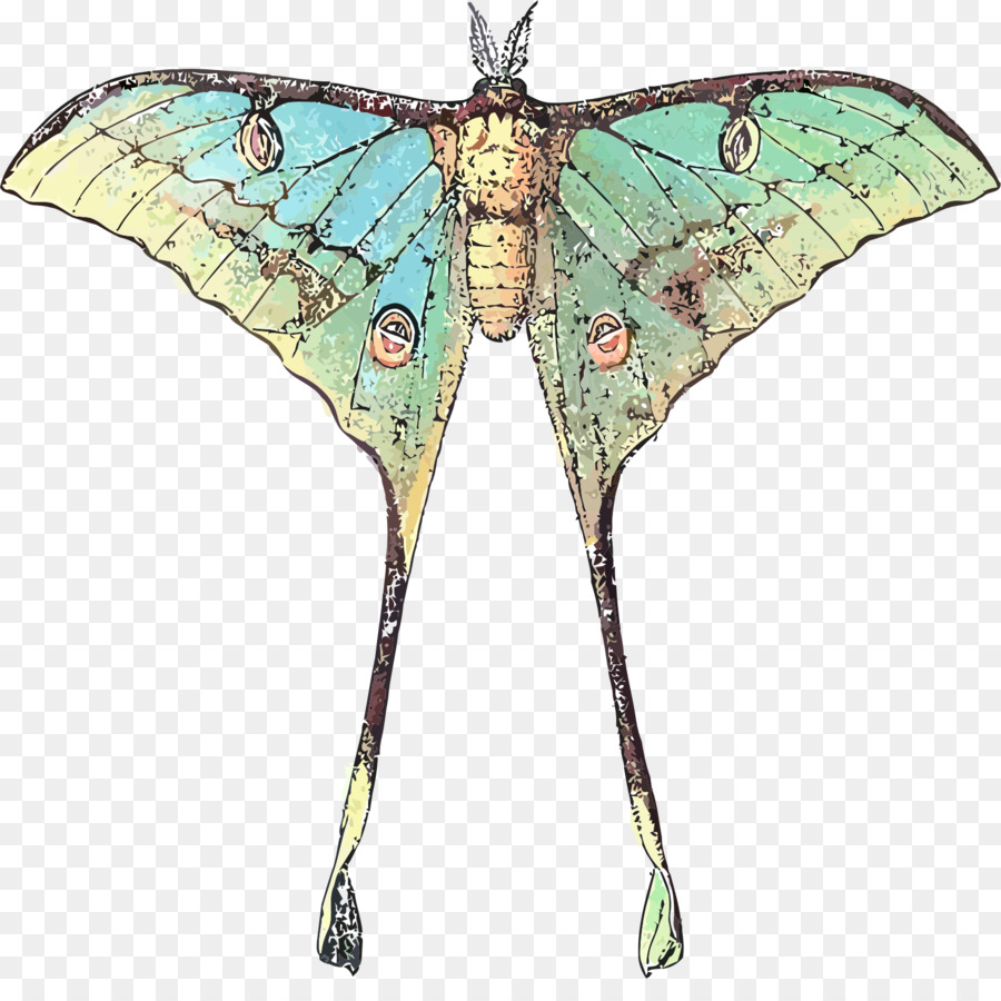 png freeuse stock Moth clipart luna moth. Moon cartoon butterfly transparent.