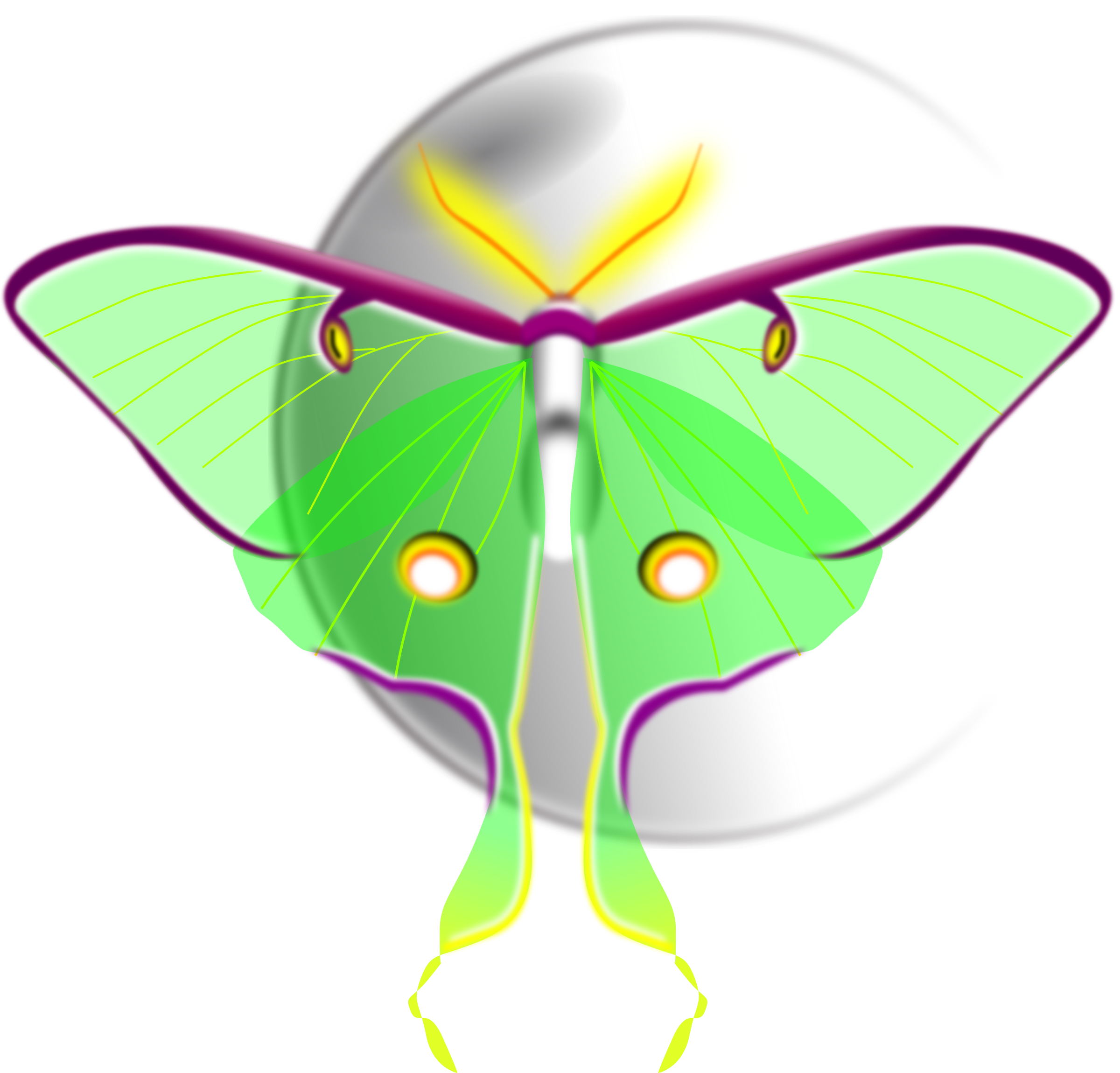 png royalty free download . Moth clipart luna moth.