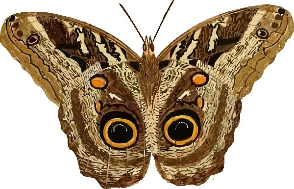 vector transparent Moth clip art