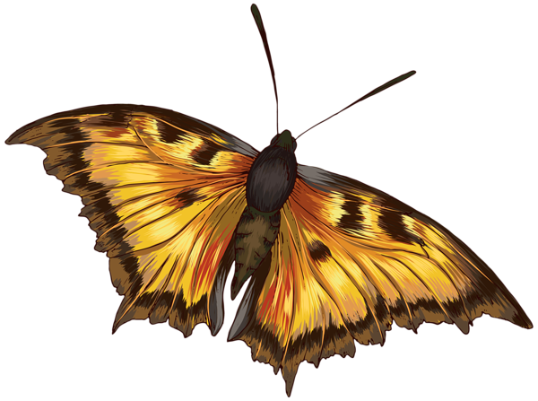 png black and white Moth clipart realistic. Butterfly png image obr.