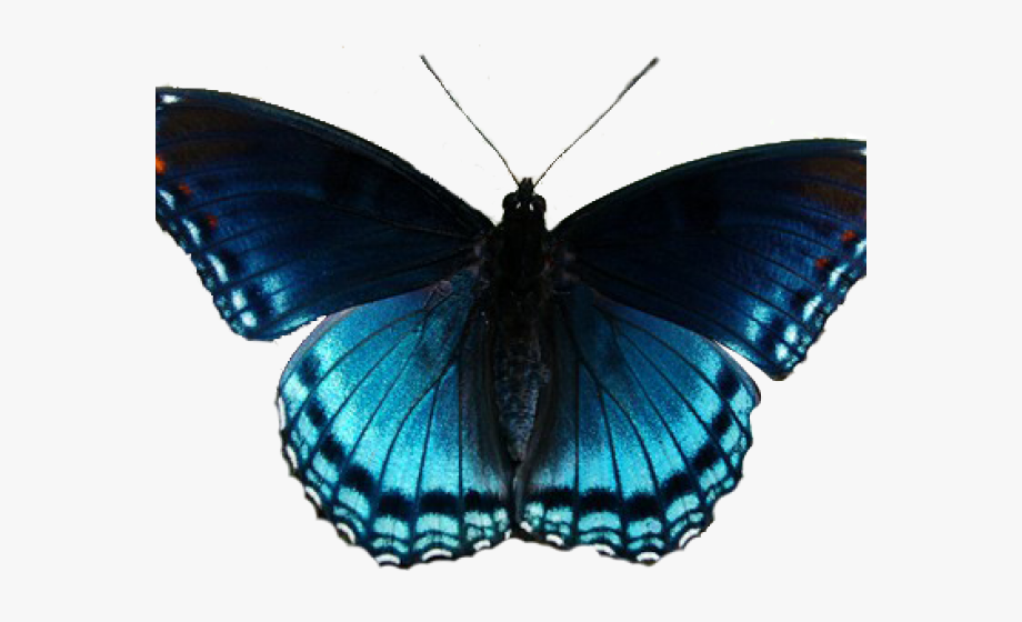 banner Insect red spotted purple. Moth clipart realistic.
