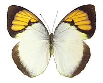 jpg download Butterflies moths image. Moth clipart realistic.