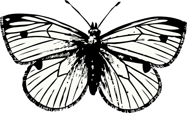 image black and white stock Cabbage Moth Clip Art at Clker