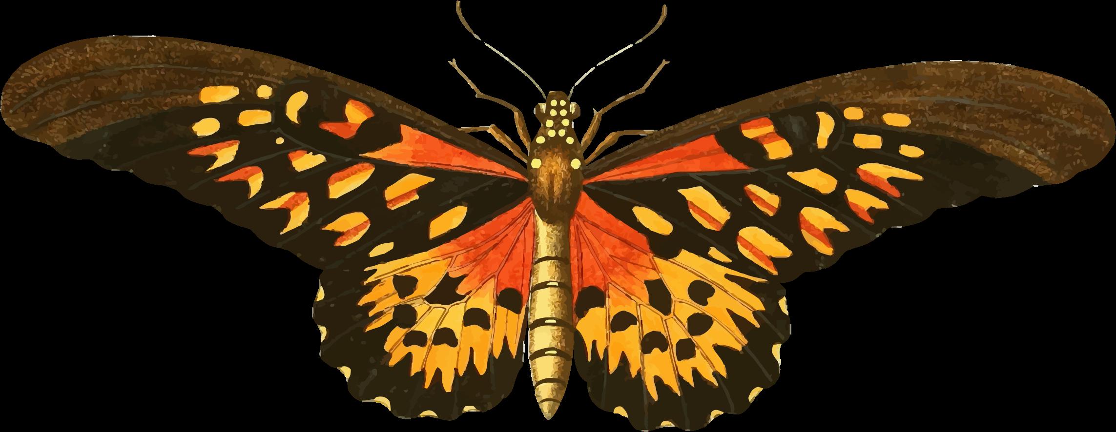 banner royalty free stock Moth clipart vintage butterfly. Illustration pinterest.