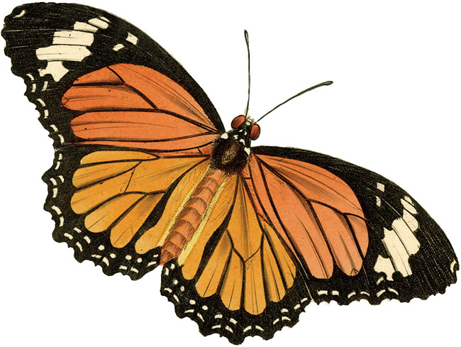 jpg free The clip art . Moth clipart vintage butterfly.