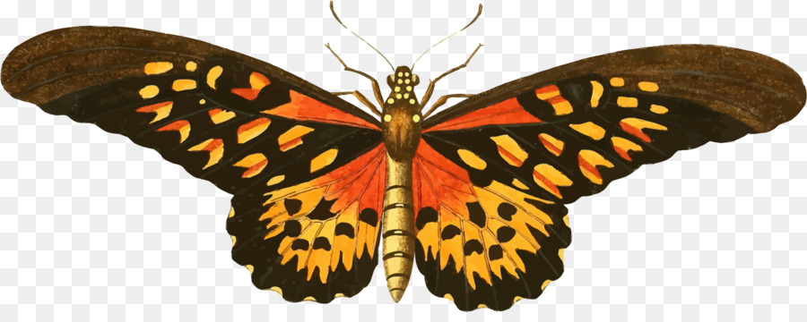 clipart royalty free stock Illustration . Moth clipart vintage butterfly.
