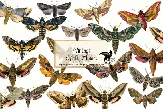 jpg royalty free download Moth clipart vintage butterfly. Moths antique clip art.