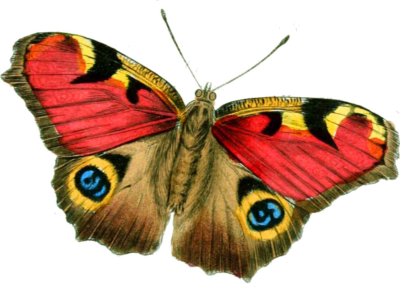 banner library library Moth clipart vintage butterfly. Glanzbilder victorian die cut.